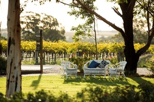 Lawn chairs and vineyard.jpg